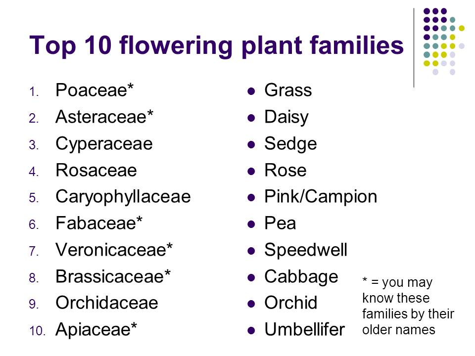 Top 10 Dicot Families Dr M Goes Wild