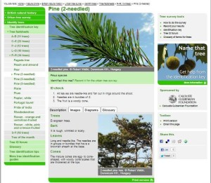 NHM tree key pinus page