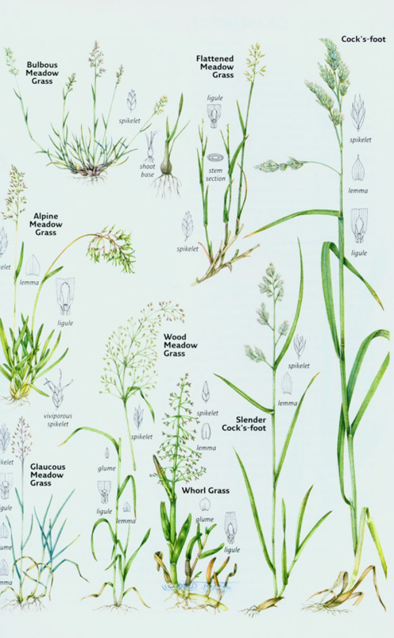 Identification and Classification of Grassland Plants