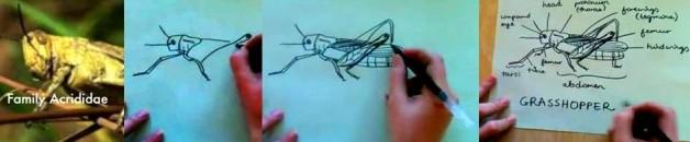 grasshoppers slide