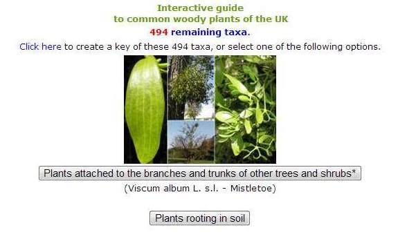 Plant identification websites — nmfwri.