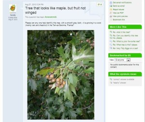 tree sorbus q image