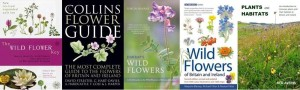 Wildflower guides 1