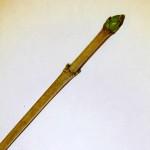 01 Acer pseudoplatanus