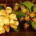 Blossom A