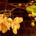 Blossom D