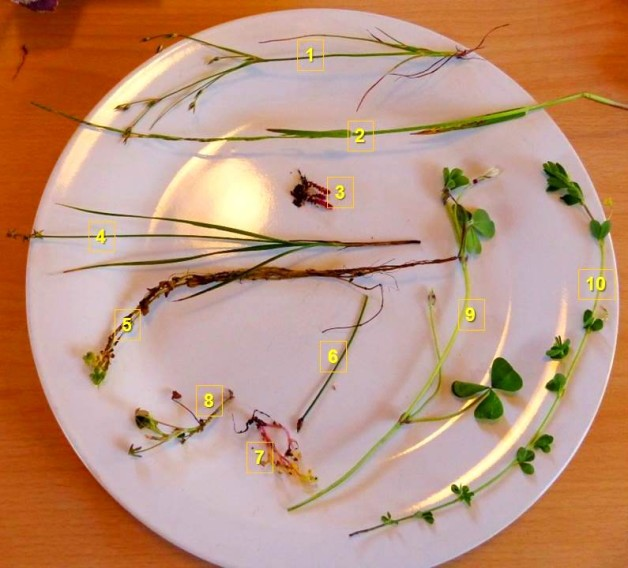 extreme botany on a plate