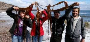 Seaweed 'Stravaganza