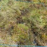 M26 Narthecium - Sphagnum valley bog