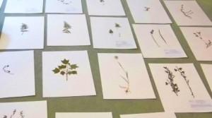 gg herbarium