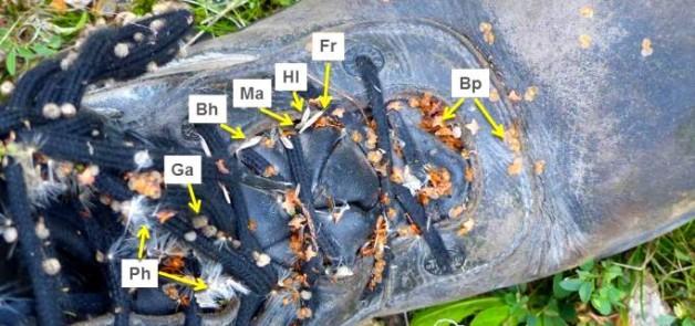 Dr M seed slide