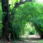 Sophie dwarfed by Chinese bamboo grove