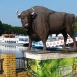 European Bison at Augustow, Poland!