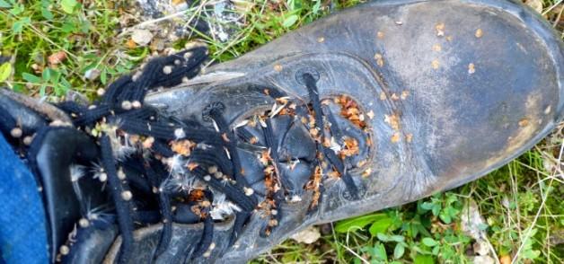 botany boots slide 2