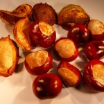 "Horse Chestnut ""conkers"""