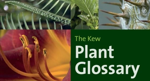 kew glossary 1