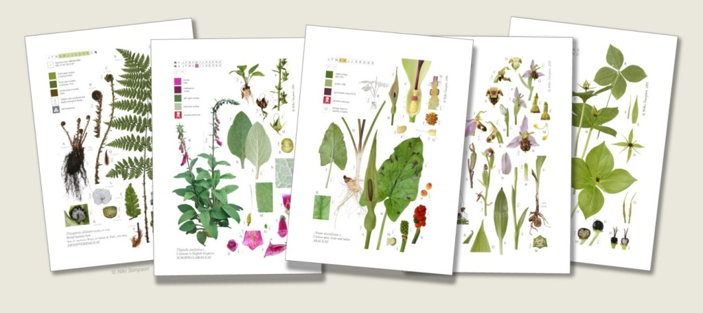 native british plants