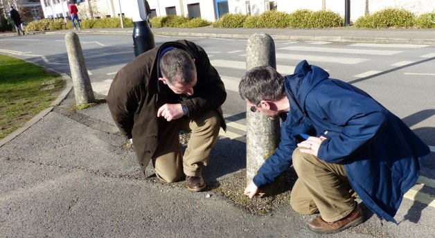 examining rosette plants