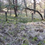 Wet woodland with Willow, Birch and Purple Moor-grass
