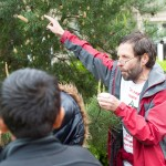Prof Tom talks Scots Pine