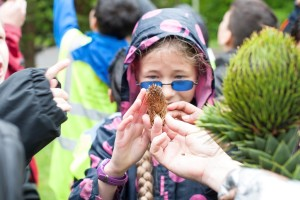 fascination of girl and boy monkey puzzle cones