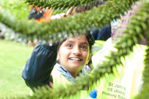 fascination of monkey puzzle