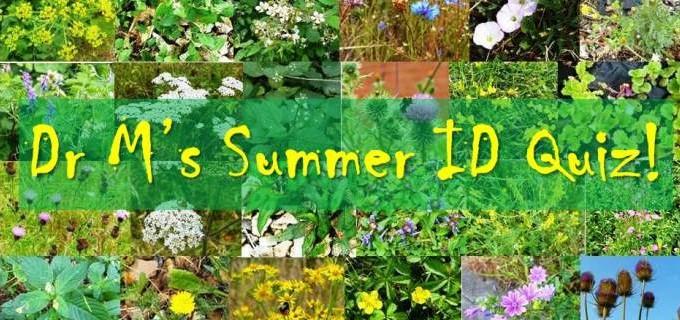 Dr M summer quiz slide
