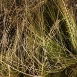6 Mat Grass