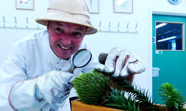 dr m and monkey puzzle 2