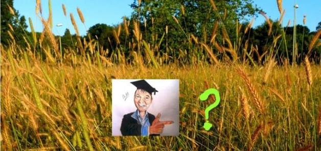 grasses slide 1