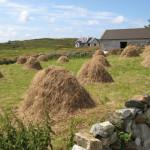 Hay meadow in Ireland