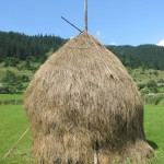 Loose stacked hay built around a central pole, Romania