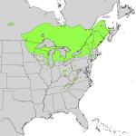 White Cedar range distribution