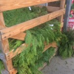 Boxes of fresh cedar fronds for Christmas decorating