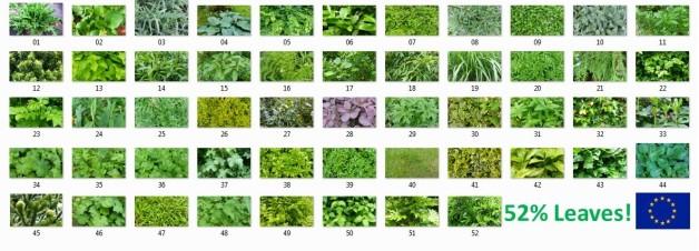 52 leaves 1