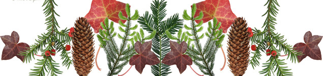 Advent Botany 2016 banner for Dr M website blog
