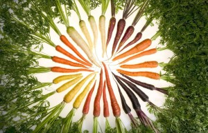 carrots_of_many_colorsw-1024x635