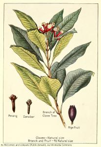 cloves-penang-zanzibar
